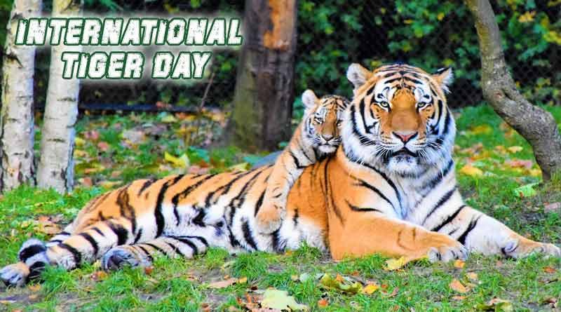 InternationalTigerDay, NationalAnimal